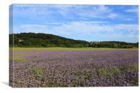 Marburg, Hessen, Germany, Field, Shades of violet, Canvas Print