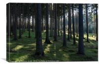 Trees ad Light in Thueringer Wald, Canvas Print
