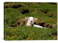 Spring Lamb, Canvas Print