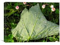Fallen leaf after rain, Canvas Print