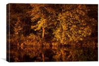 Golden Reflection, Canvas Print
