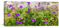 Wild Flowers on the Western Isles, Canvas Print