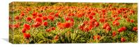 Poppies dancing in a field, Canvas Print