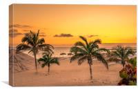Palm Tree Beach , Canvas Print