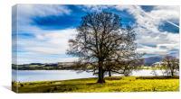 The lakeside tree, Canvas Print