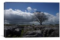 Lone tree on limestone pavement, Canvas Print