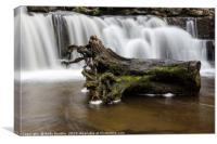 Scaleber Force Tree Stump, Canvas Print