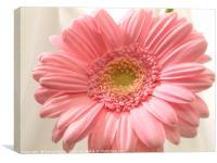 Pink carnation, Canvas Print