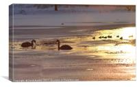 swans on Linlithgow Loch at sunset, Canvas Print