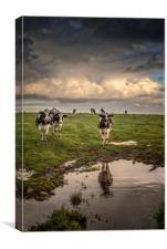 Cows at Black Rock, Canvas Print