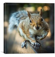 Squirrel in the park, Canvas Print