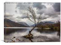 The tree in the lake.Llyn Padarn,North Wales, Canvas Print