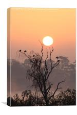 Arboreal Sunrise, Canvas Print