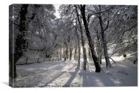 Winter Woodland in the North Pennines, Upper Teesd, Canvas Print