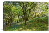 Hillside Wood, Canvas Print