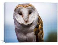 The Barn Owl, Canvas Print