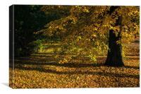 Fall Mood, Canvas Print