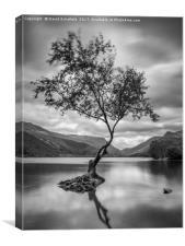 The Lone Tree, Llyn Padarn, Llanberis, Canvas Print