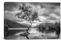 The Lone Tree, Llyn Padarn, Llanberis, Canvas Print