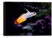 firefish, Canvas Print