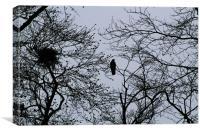 Tree top crow, Canvas Print