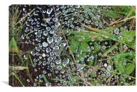 Water droplets on a spiders web, Canvas Print