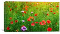 The Poppy Field, Canvas Print