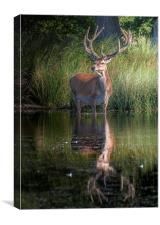 Deer at the Lake, Canvas Print
