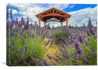 Walking through the Lavender, Canvas Print