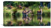 Deer in Richmond Park, Canvas Print