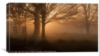 Dawn in Richmond Park London, Canvas Print