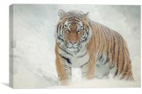Tiger in the snow, Canvas Print