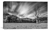 dead tree long exposure, Canvas Print