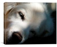 Let sleeping dogs lie, Canvas Print