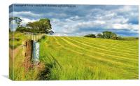 Summer field with cut grass, Canvas Print