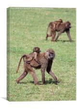 Monkey-Back, Canvas Print