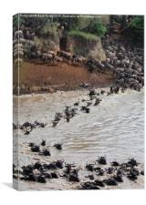 The Great Wildebeest Migration, Canvas Print