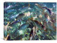 Go Fish, Canvas Print
