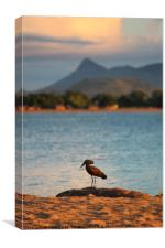 Lake Malawi, Canvas Print