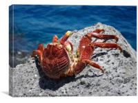 Red Crab, Canvas Print