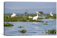 Peaceful Pelicans, Canvas Print