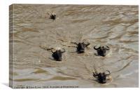 Swimming Wildebeest, Canvas Print