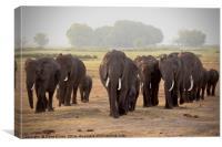 Elephant Herd, Canvas Print