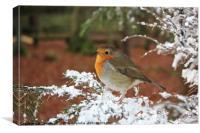 Snow Robin, Canvas Print