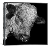 Bull Ring!, Canvas Print