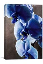 Blue Orchid, Canvas Print