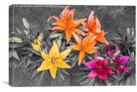 Colour Burst Lilies, Canvas Print