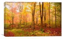 Palette of Autumn Colour, Canvas Print