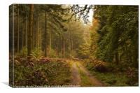 Woodland Paradise , Canvas Print