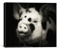 Happy Hog! , Canvas Print